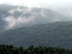 Morning mist on the Laurel Ridge in Southwest Pennsylvania
